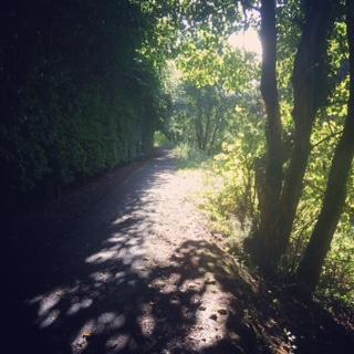 tree tunnels and sunshine